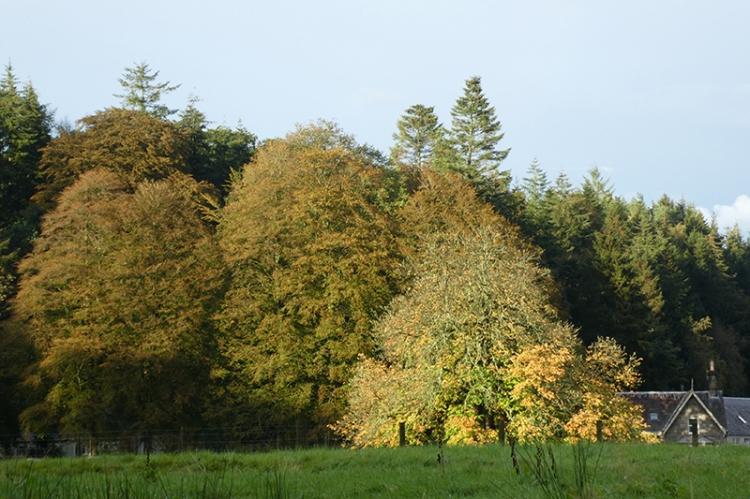 early autumn castleholm