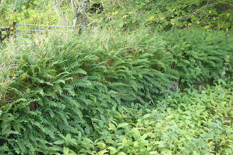 ferny wall