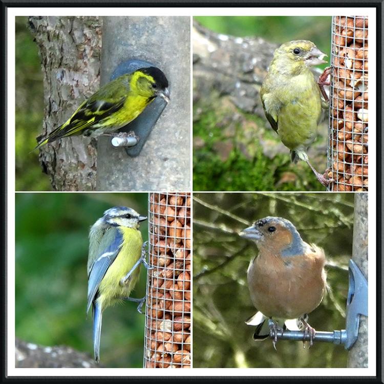 four birds laverock hide