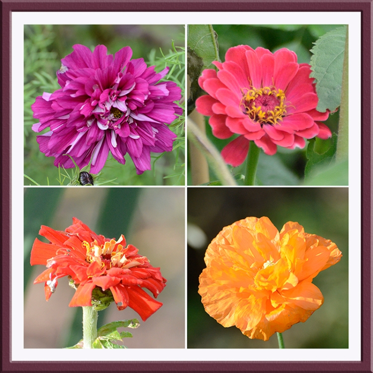 four flowers am and pm