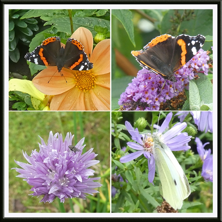 four insects