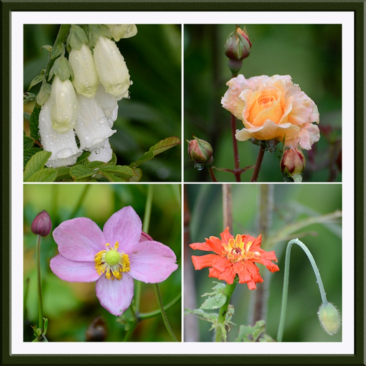 four soggy flowers