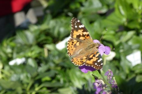 garden centre butterfly