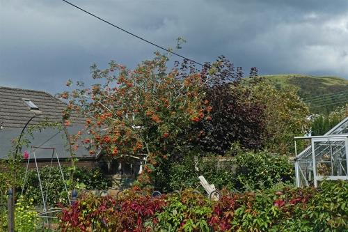 garden weaher contrast