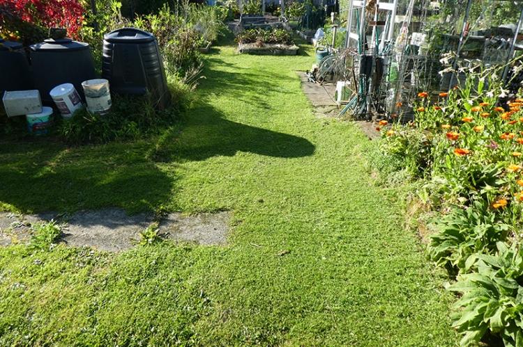green house grass equinox