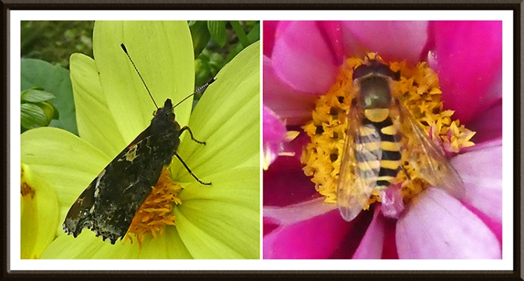 insects on two flowers