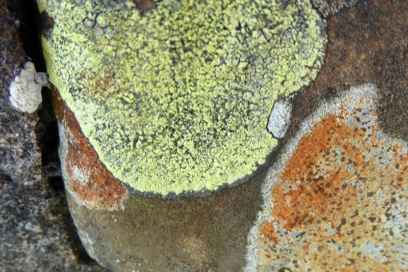 lichen at Half Morton