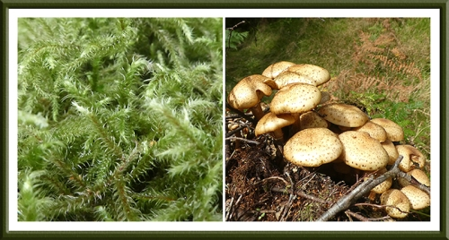 moss and fungus longwood