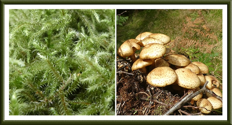 moss and fungus longwood