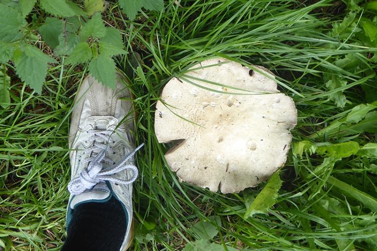 mushroom and foot