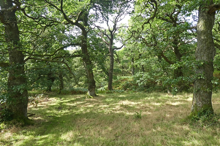 oak wood jenny noble