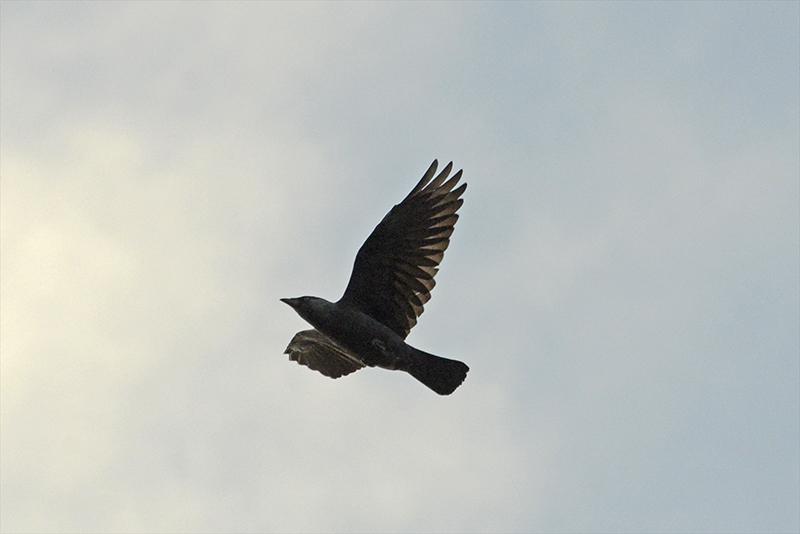 passing flying bird