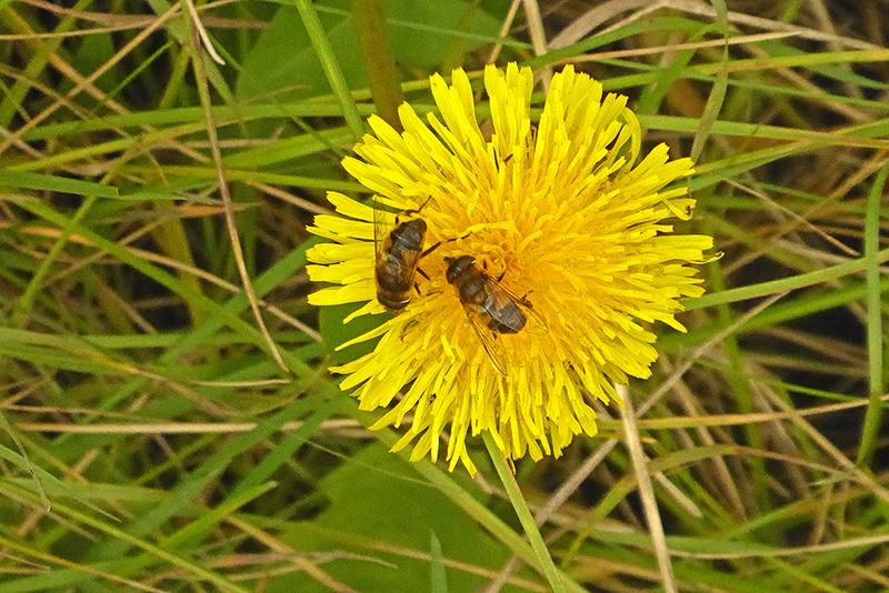 roadside yellow flower