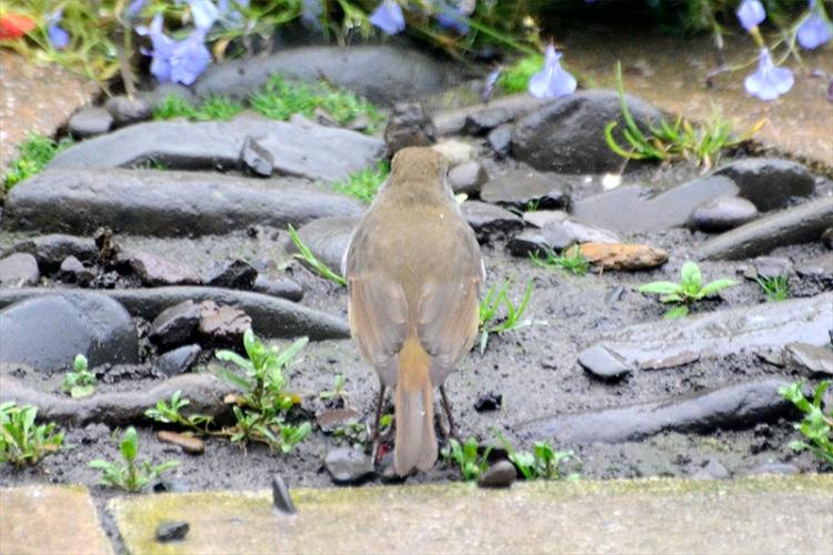 robin turning back