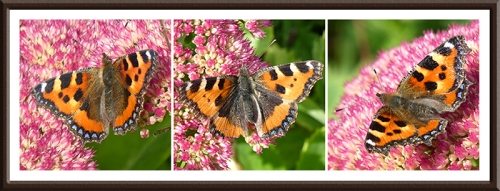 small tortoiseshell butterfly panel