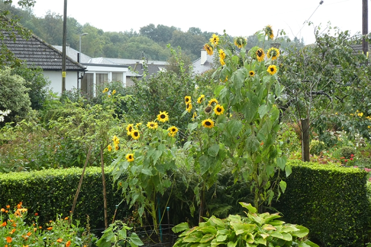 soggy sunflower tower