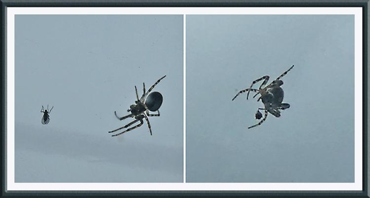 spider in action