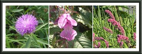 three biking wild flowers