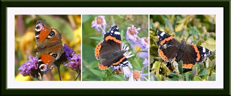 three butterflies on various flowers