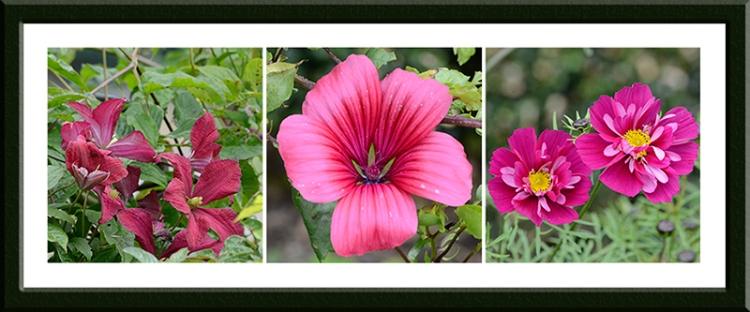 three deep red flowers