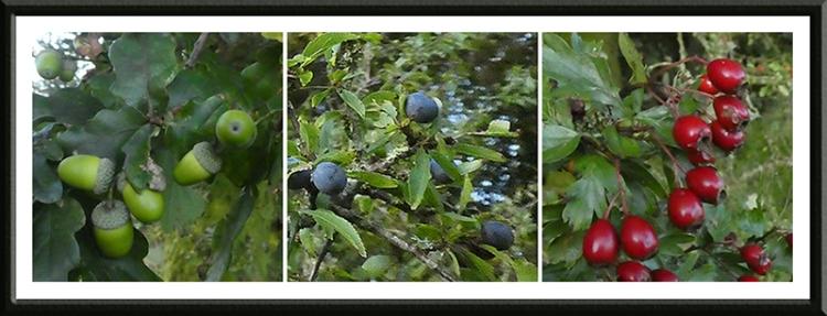 three fruits gaskells