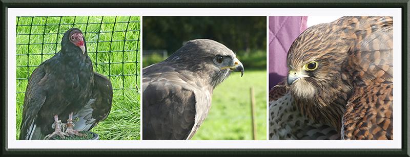 three hawks at ag show