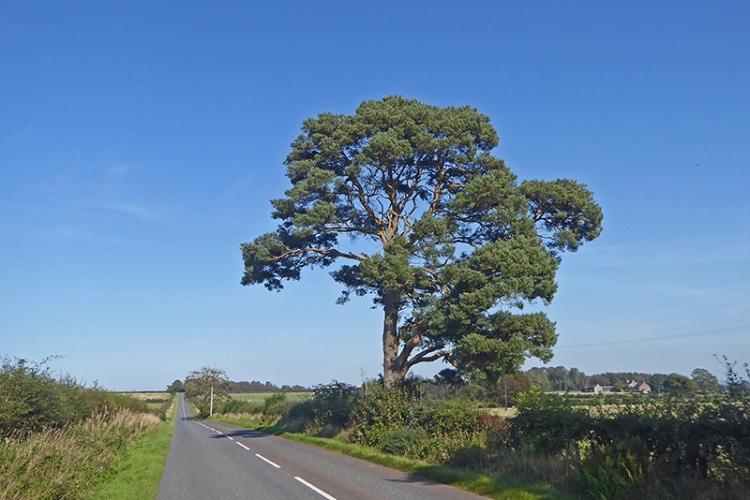 Tree near KPF