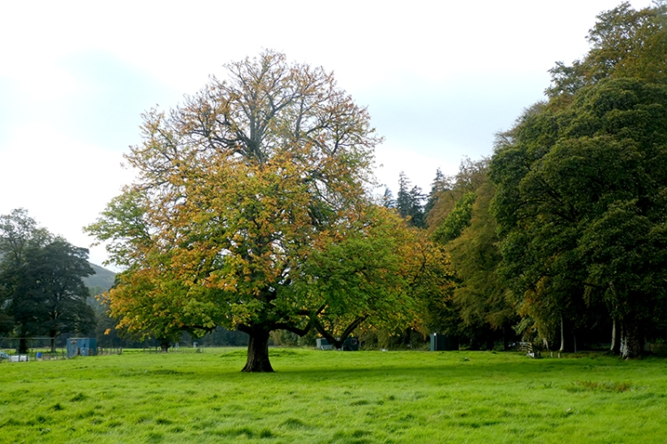 tree turning castleholm