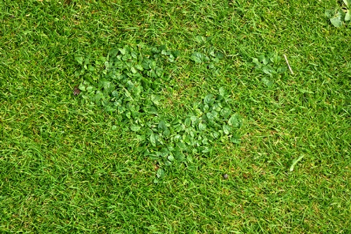 weeds on lawn