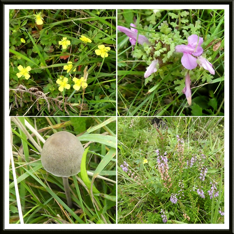wildflowers and fungus meikleholm