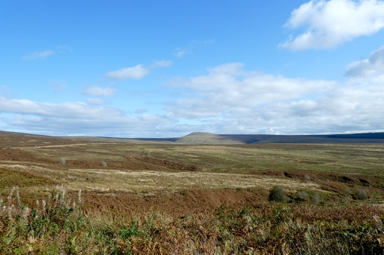 across Langholm Moor october