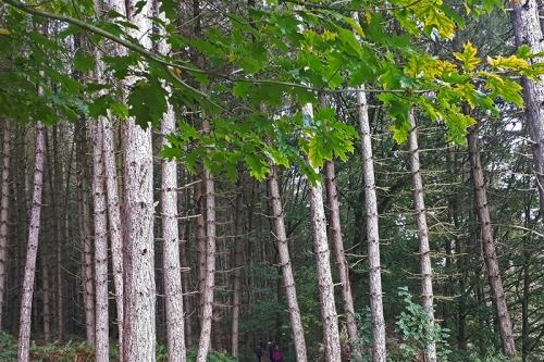 Andrew's wood