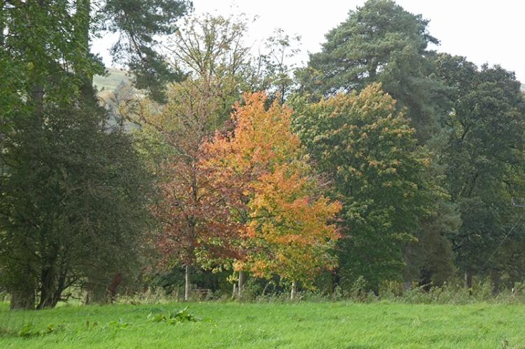 autumn colour new path