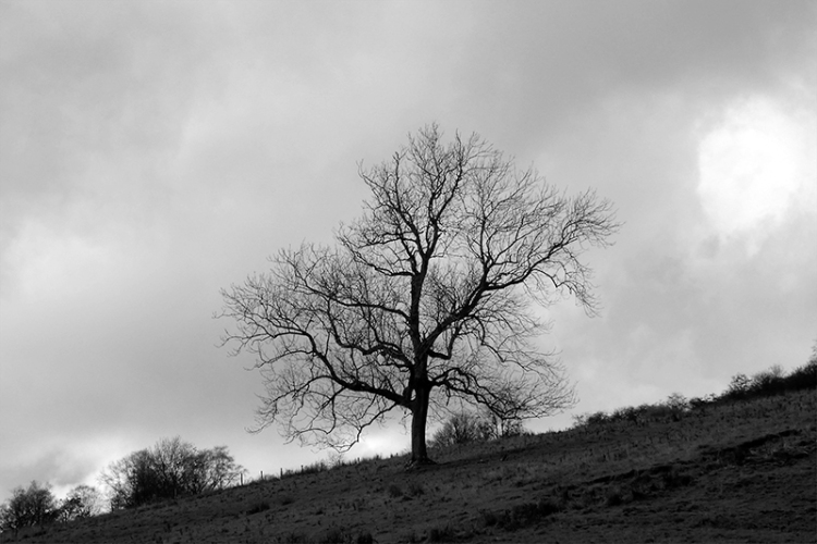 bandw tree