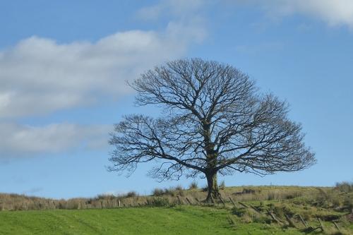 bare tree bloch