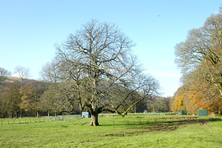 bare tree castleholm