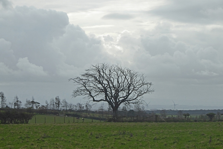 bare tree mossknowe