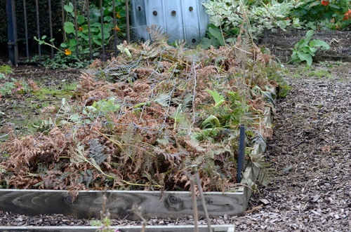bracken on veg bed