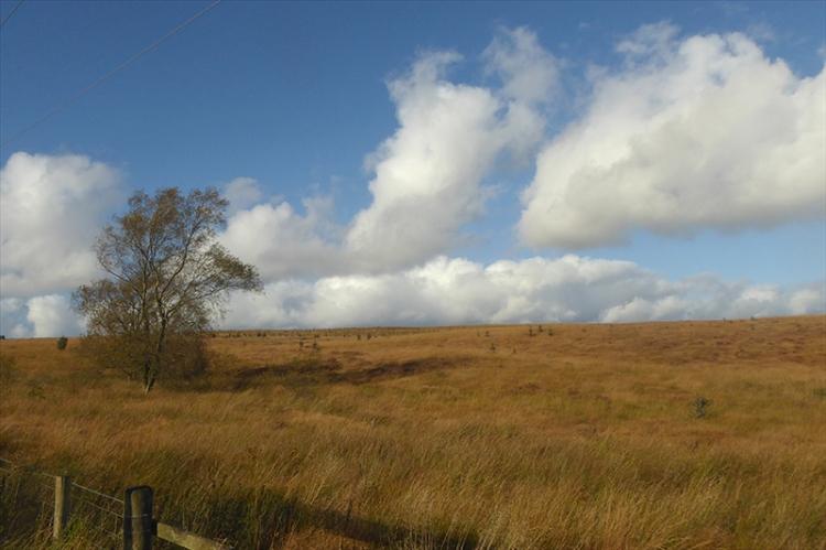 brown hillside Kerr