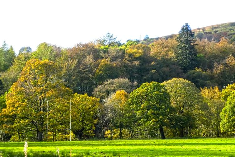 castleholm trees 20 Oct
