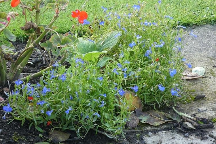 colourful corner lawn