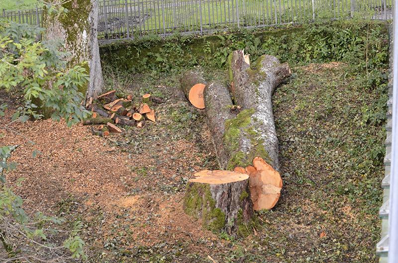 felled tree jubilee bridge