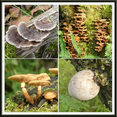 four fungi tarras wood