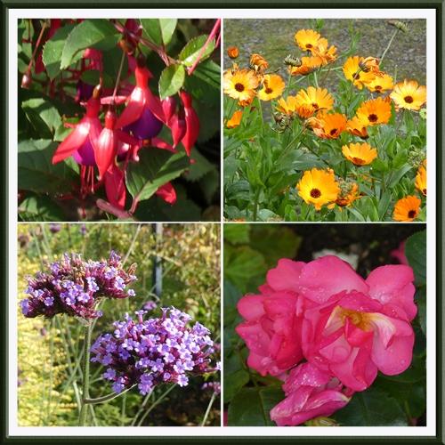 fuchsia, marigolds, verbena, rose