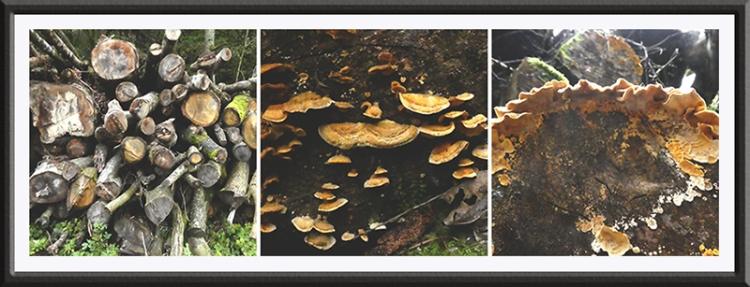 fungus rowanburn railway