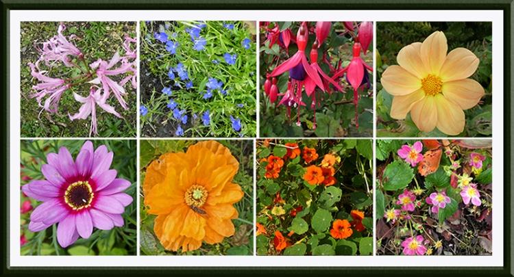 garden flowers late october