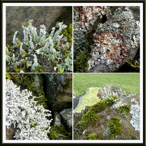 interesting wall lichen