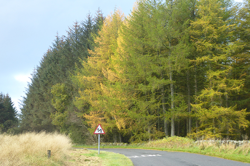 larch wauchope road