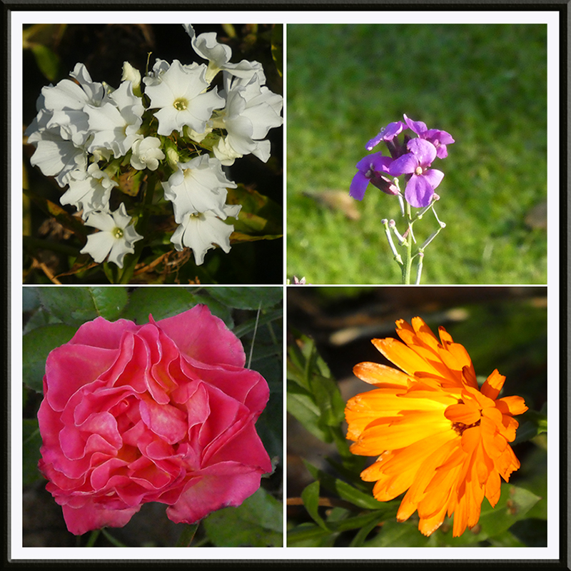 last october flowers