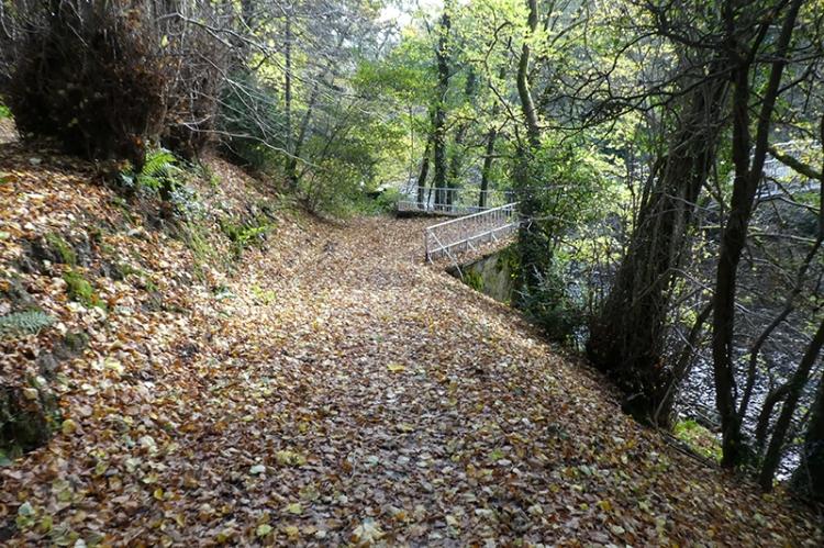 leafy tarck to duchess bridge